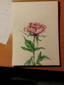 Jeszcze jedna różyczka