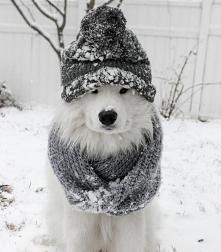 #psiuńcio #zima