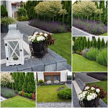 #ogród #rośliny