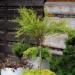 2w1 #rośliny #balkon #donica