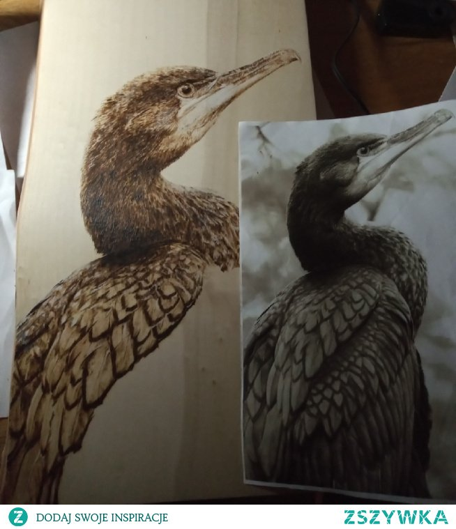 kormoran na topolowej desce - w trakcie pracy