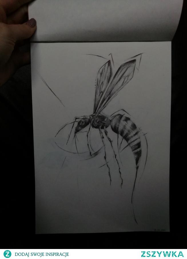 Praca że szkicem