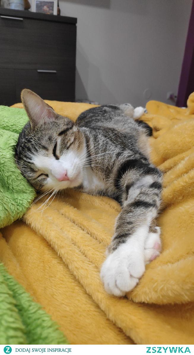 Po zabawie mała drzemka, moja Nala. #kot #spioch #zima #dobranoc