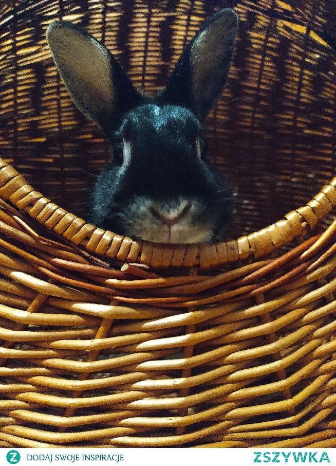 #króliczek#słodki#koszyk#wiklina#zdjęcie