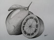 Cytryna rysunek