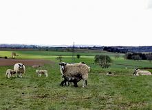 Wiosna ❤️ #maluszki #gdywszystkozaczynasierodzic
