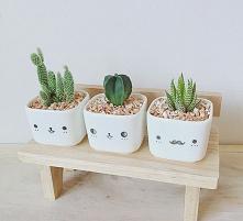 roślinki  #pomysły #roślink...