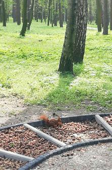 #spacer#park#wiewiórka#ślic...