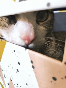 Kocie oczka. Nala #kot #dom...