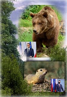 Raz chory niedźwiedź pierdział, budząc miłosierdzie A suseł mu oklaski bił po każdym pierdzie. Czy ten suseł zwariował? - spytał dzięcioł śledzia. Nie - śledź odparł - to rzeczn...