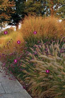 1. 'Hameln' fountain grass ...