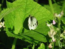 #motyl#przyroda#