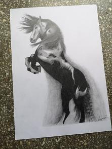 Koń na szybko ;-) ołówek 8B