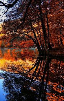 Krajobraz z drzewem w tle.