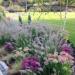 Przedogrodek #roślinki #ogródek