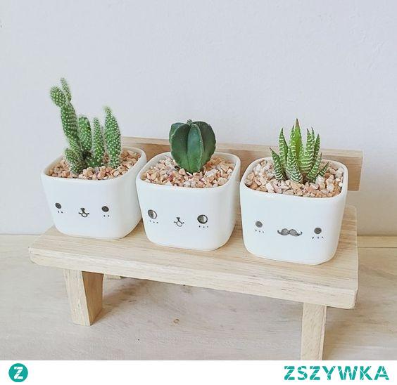 roślinki  #pomysły #roślinki #diy #dekoracja