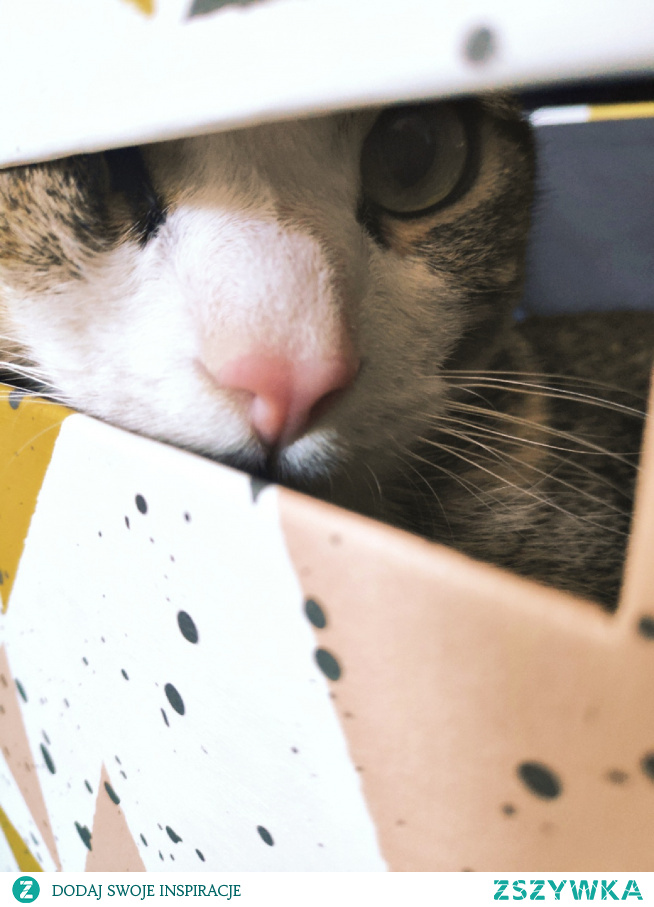 Kocie oczka. Nala #kot #dom #oczy