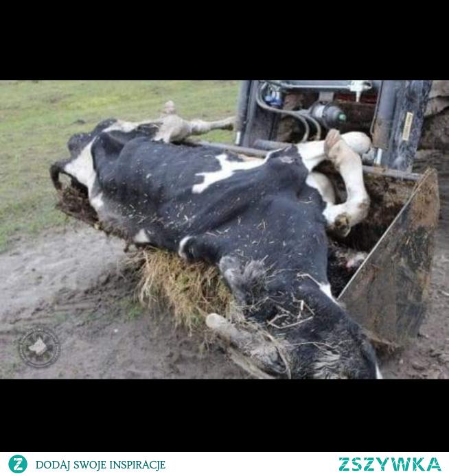 umarłe zwierzaki zagłodzone zagłębione zestresowane bild.de kopane i resztę tych wszystkich złych rzeczy które tam przechodzą zwierzęta