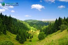Wpływ lasu na zdrowie człow...