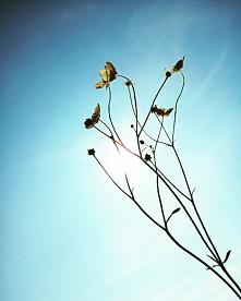 #kwiat#słońce#niebo#