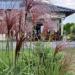 #trawy #ogrod