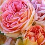 Okładka Róże