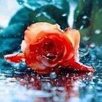 Okładka Rainy day