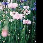 Okładka la beauté des fleurs