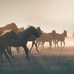 Okładka konie