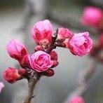 Okładka ✿ Spring ✿