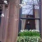 Okładka ogrody w pojemnikach