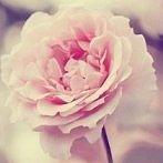 Okładka Kwiaty <3