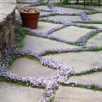 Okładka Ogród *,*