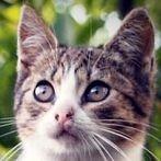 Okładka Kocia rodzina