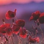 Okładka Kwiaty ♣