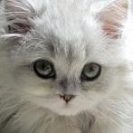 Okładka Cats