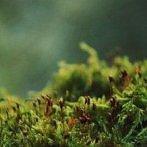 Okładka Dry Silence- Nature