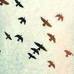 Okładka Ptaki