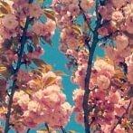 Okładka Wiosna