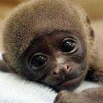Okładka małpki i małpy