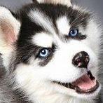 Okładka Psy
