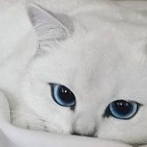 Okładka Koteły i cały zwierzyniec