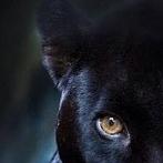 Okładka Tygryski,lewki i inne kotecki