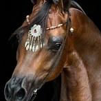 Okładka ☻ Konie, jeździectwo ☺