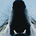 Okładka Wilki ♥