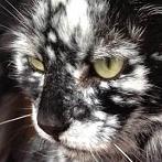 Okładka ❤ Koty ❤