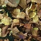 Okładka Jesien