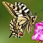 Okładka Motyle