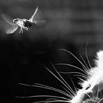 Okładka Koty - black&white