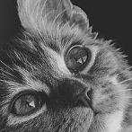 Okładka kociczki ♥